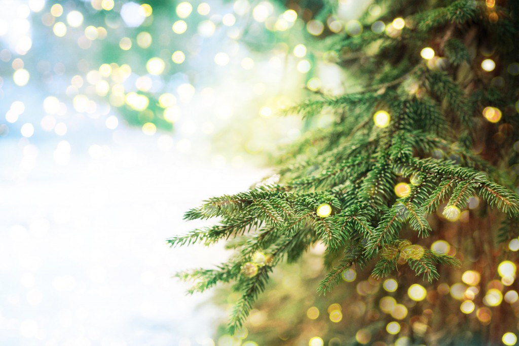 Image result for christmas tree background